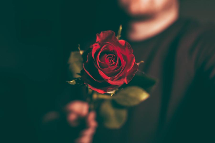 homem a segurar rosa vermelha