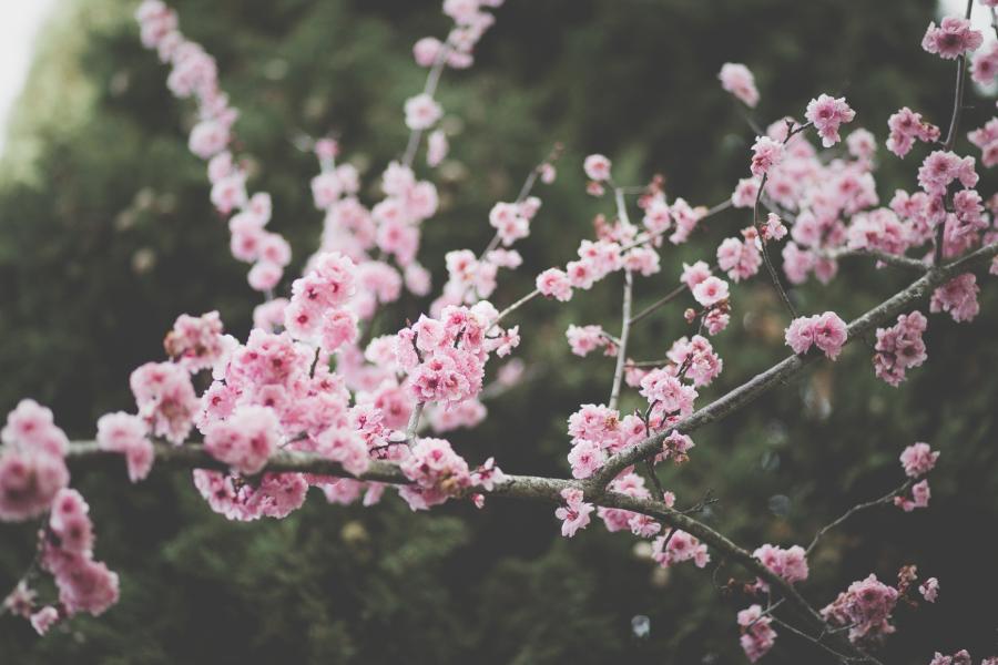 equinocio da primavera