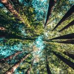 significado de sonhos com natureza