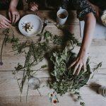 plantas e ervas de protecao