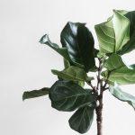 plantas para harmonizar ambientes tensos
